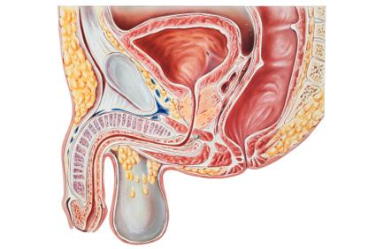 prostatitis simptomi forum férfiak fájdalma vizeléskor